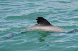 participate-dolphin1