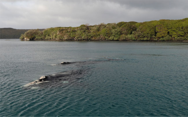 port-ross-whales
